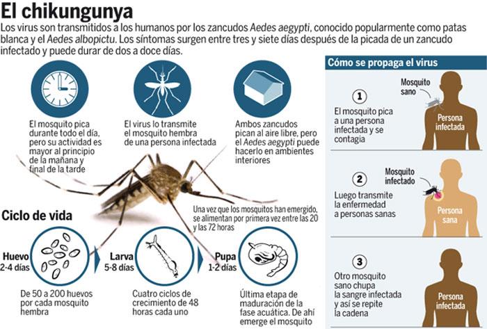 chikungunya-causas-tratamiento