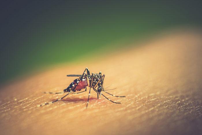 el-dengue-infografia-causas