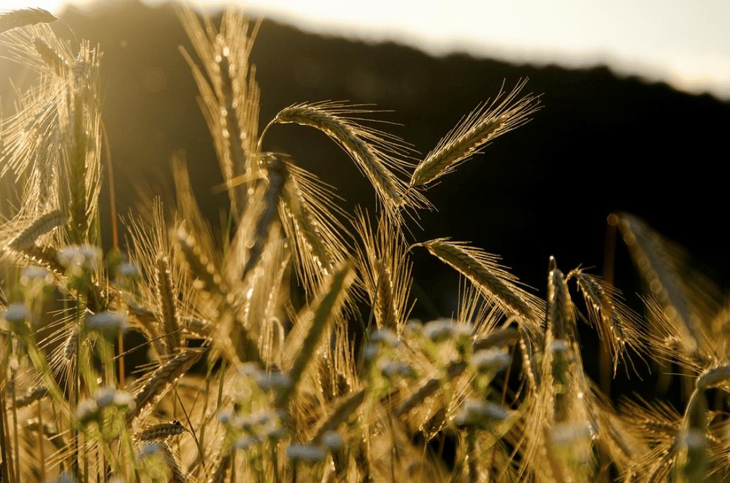 revolucion agricultura peru
