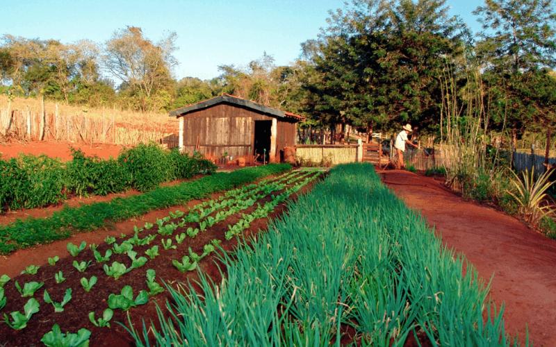 horticultura peru